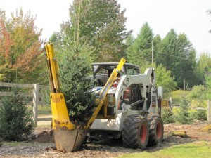Image of planting and moving a tree.